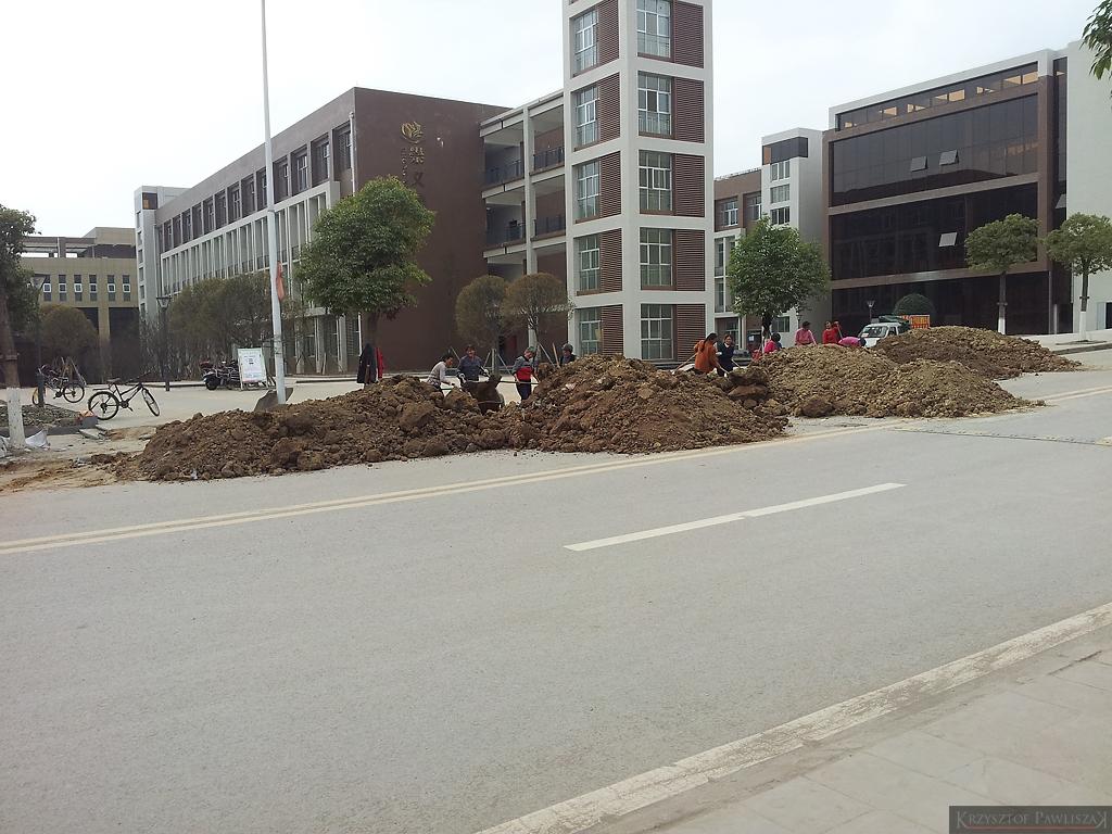 Sadzenie drzew po chińsku - przyjeżdżają w całości, praktycznie bez korzeni....