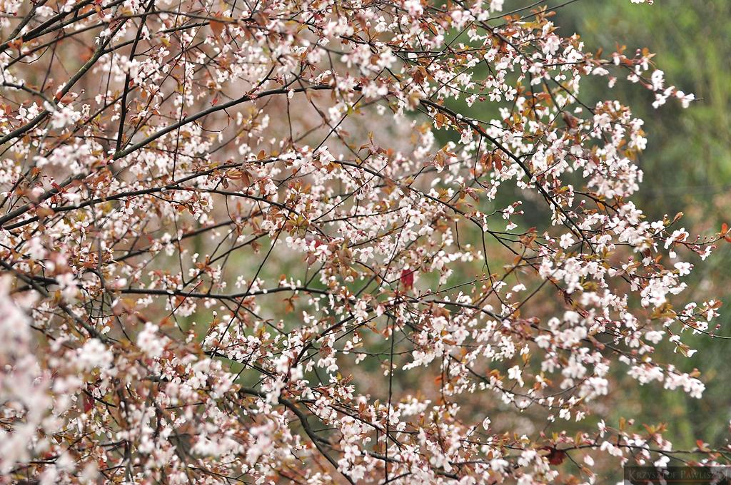Kwitnące kwiaty na terenie klasztoru